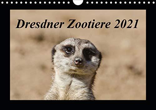 Dresdner Zootiere 2021 (Wandkalender 2021 DIN A4 quer)