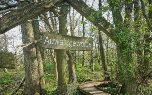 Oberlausitzer Heide und Teichlandschaft 1 e1569310061980