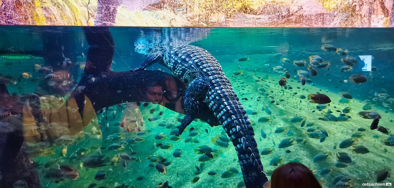 Afrykarium oceanarium zoo wroclaw 004