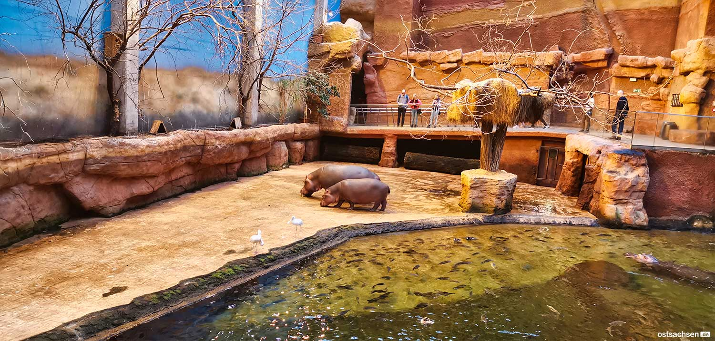 Afrykarium oceanarium zoo wroclaw nilpferd haus