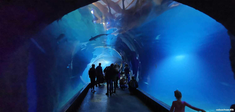Afrykarium oceanarium zoo wroclaw unterwasser