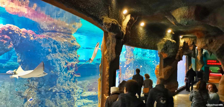 Afrykarium oceanarium zoo wroclaw unterwasserwelt