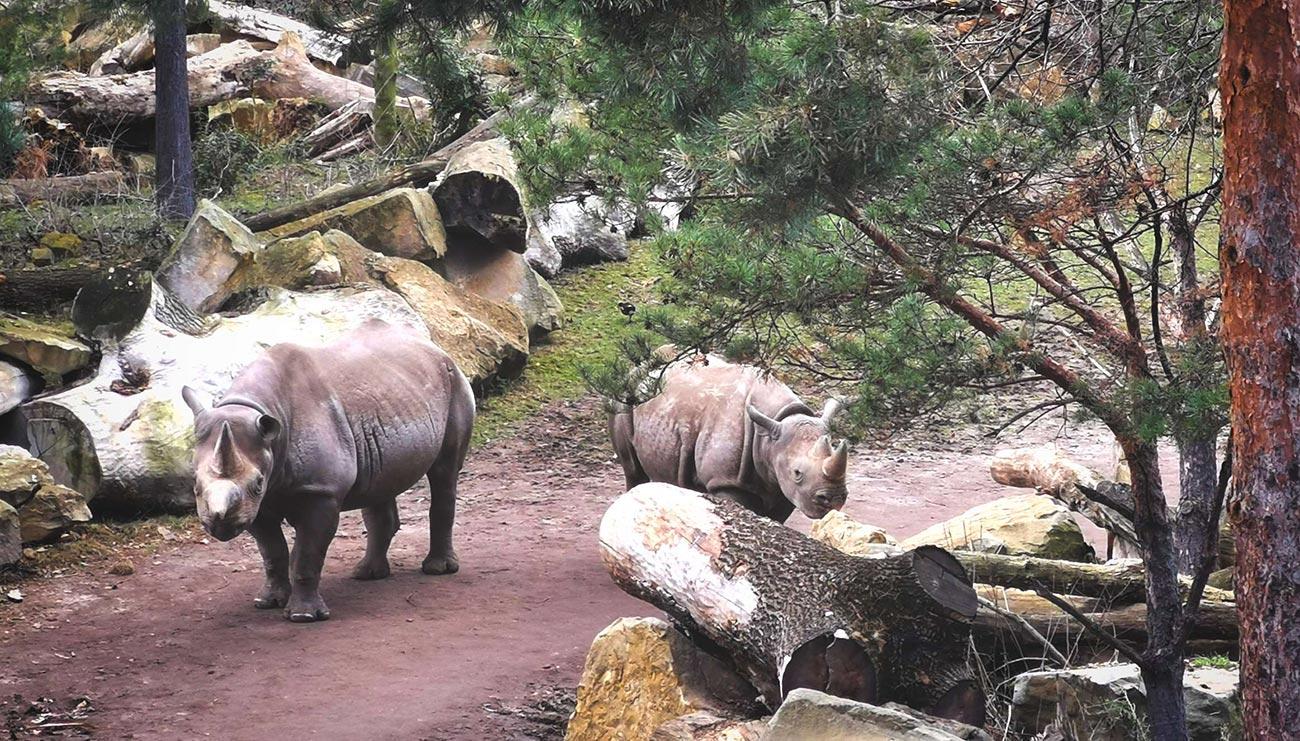 nashoerner zoo leipzig