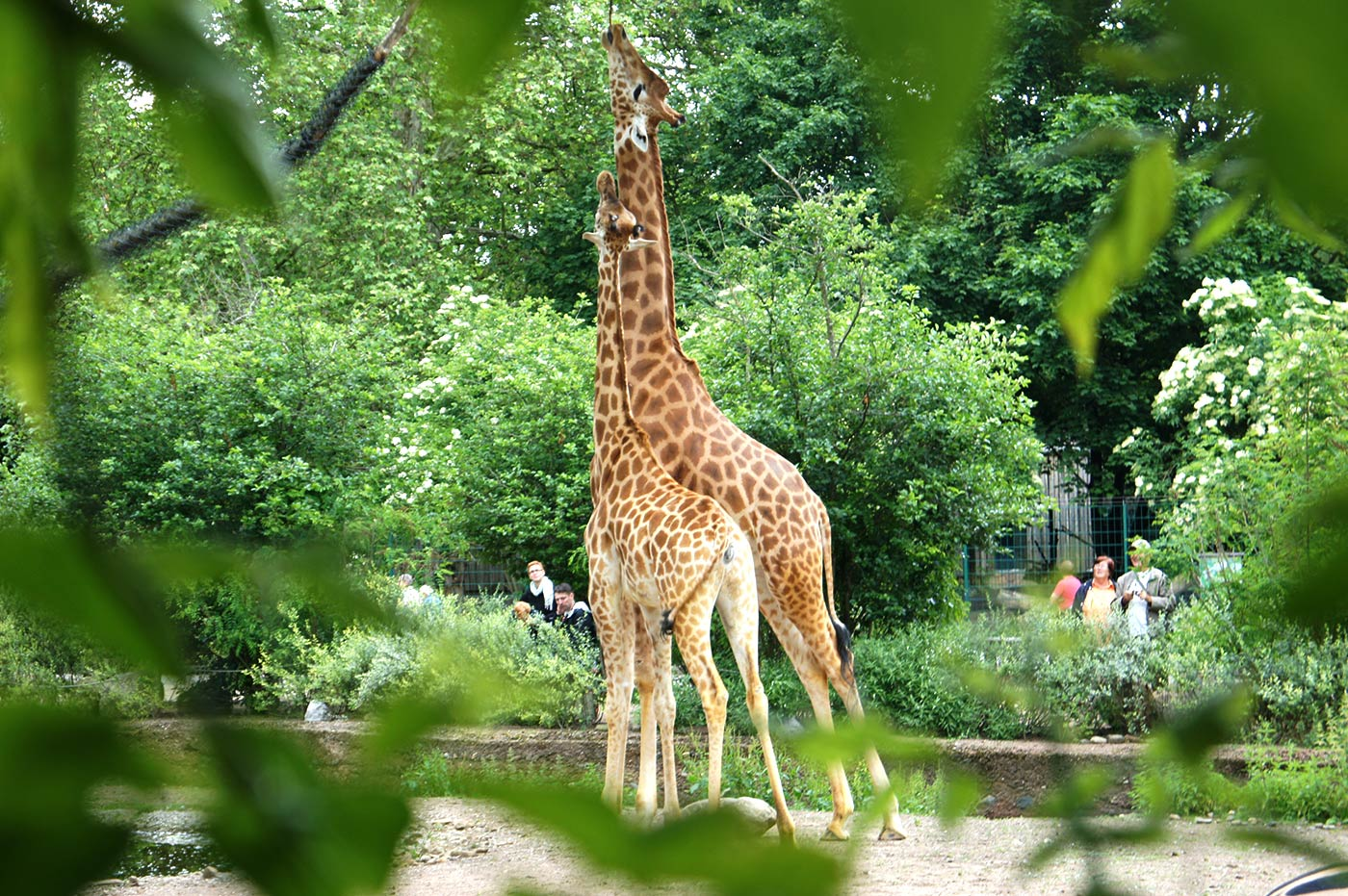 Zoo Dresden Informationen 1
