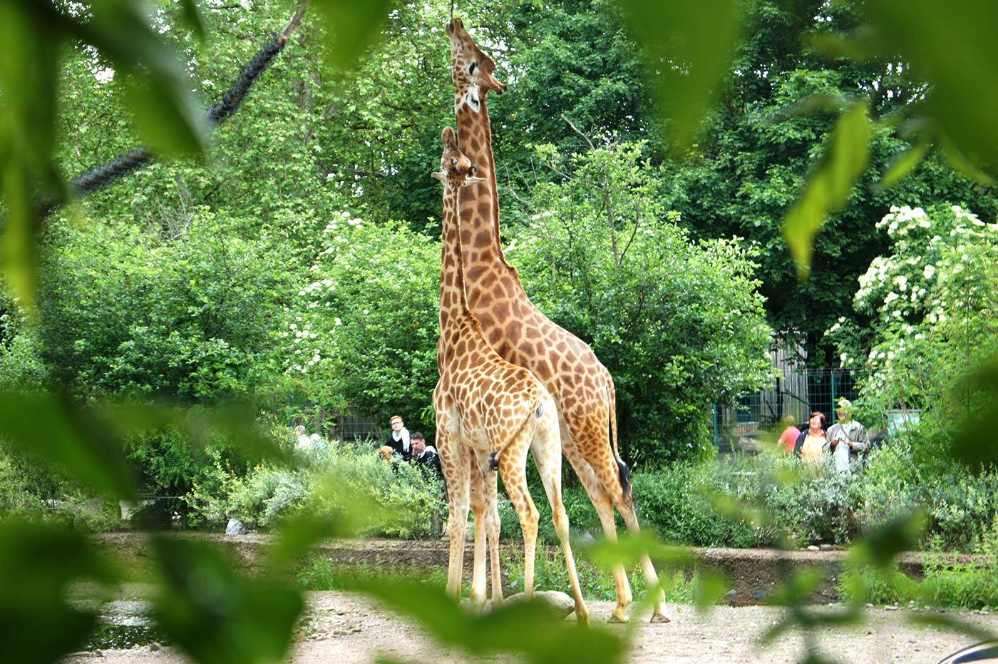 Zoo Dresden Informationen