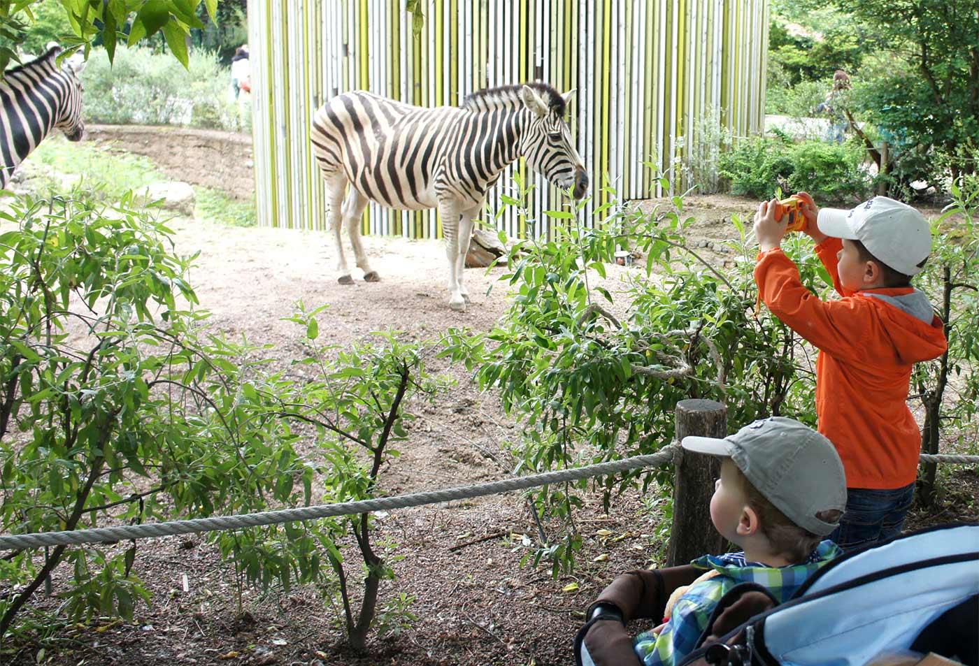 familien ausflug zoo dresden